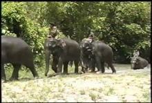 13157_burma_elephant9.mp4