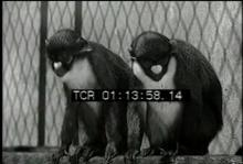 12559_monkeys2.mp4