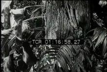 12559_monkeys3.mp4