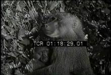 12559_monkeys4.mp4