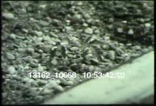 13162_10668_tomato_pesticides.mov