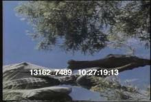 13162_7489_crocodile_swamp.mov