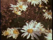 13171_9459_flowers.mov