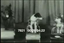 7821_dog_treadmill.mov
