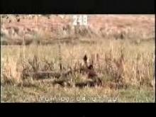 10632-10634_wildlife.mp4
