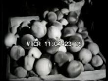 9178_peaches_harvest.mp4