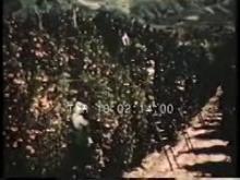 10360_orange_growers.mp4