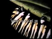 7139_butterfly.mp4