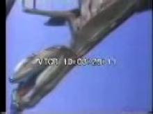 8248_Dragonflyandmantis.mp4