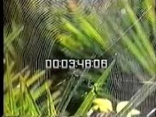 7981_spider.mp4