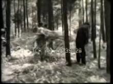 9674_cut_trees.mp4