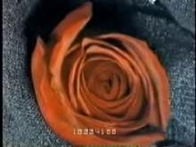8808_TL_Red_Rose.mp4