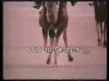 7195_Camels1.mp4