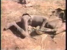 8988_starving_children.mp4