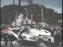 9759_whale_carcass.mp4