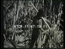 8957_plantation.mp4