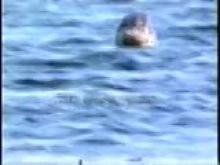 9400_seals_underwater.mp4