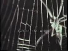 5473_spider_web_catch_fly.mp4