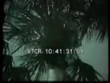 7177_coconut_monkey.mp4
