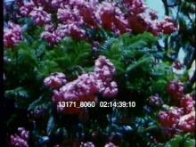 13171_8060_LA4.mov