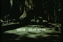 10518_yosemite_woods1.mov