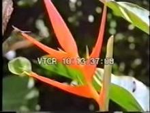 7612_hummingbird.mp4