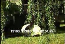 13160_12387_panda_birth10.mov