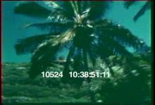 10524_surfing2.mov