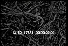13152_17384_farm_boy.mov