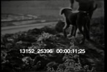 13152_25396_boy_digging.mov