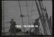 7855_whaling1.mov