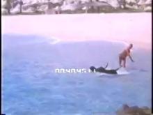 7980_Dog_Ocean_Dive.mov