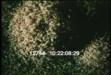 12744_fungi_mold.mov