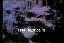 8520_Niagara _montage.mov