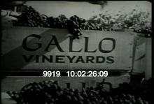 9919_gallo_wine.mov