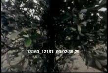13160_12181_condors_andean1.mov