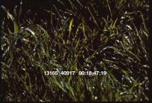 13165_40917_weather9.mov