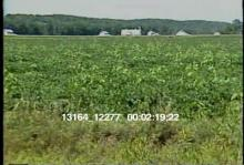 13164_12277_farms2.mov