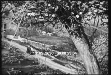 13165_3630_earliest_film4.mov