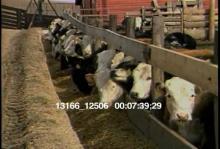 13166_12506_farm_animals5.mov