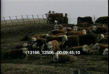 13166_12506_farm_animals6.mov