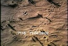 7118_lizards.mov