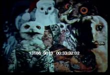 13166_9013_frank_film1.mov