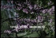 13153_27785_symphony1.mov