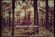 13165_31065_mesopotamia1.mov