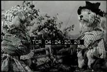 12560_hillbilly_dog1.mov