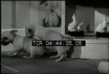 12560_puppy_love.mov