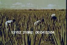13152_21962_Haitians5.mov