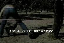 13154_27538_fruit_pickers14.mov