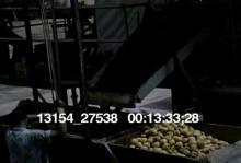 13154_27538_fruit_pickers13.mov